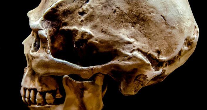 Cientistas revelam por que cérebro humano encolheu ao longo do tempo