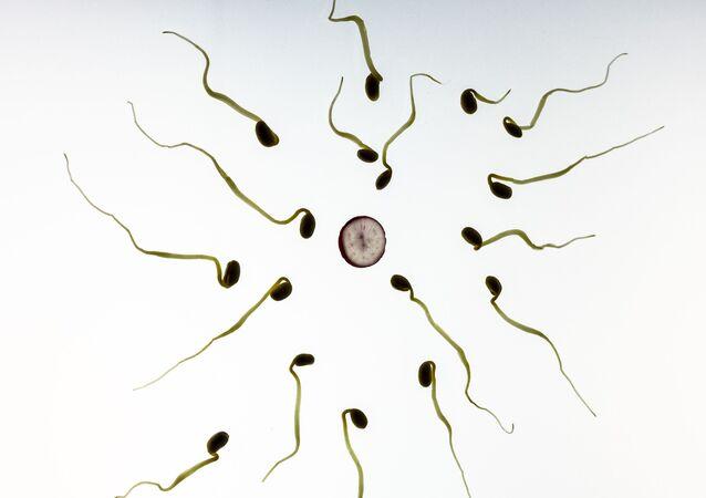 Representação artística de óvulo e espermatozoides