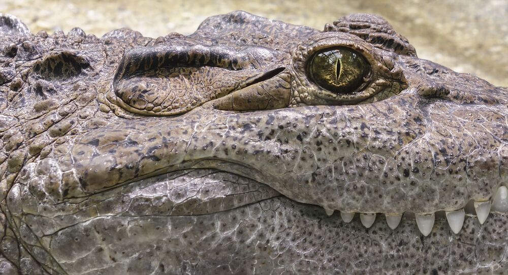 Foto de crocodilo
