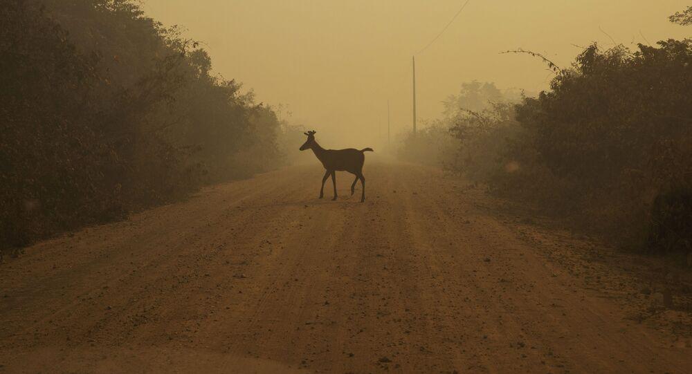 Vegetação é consumida pelo fogo e animais morrem na região de Poconé, no Mato Grosso, Brasil, 7 de setembro de 2020