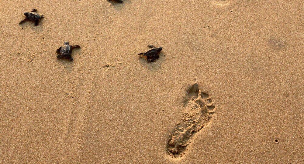 Pegadas na areia (imagem referencial)