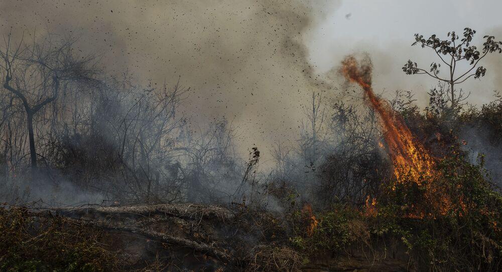 Vegetação queimada pelos incêndios florestais que atingiram a terra Indígena Baia dos Guató, no Pantanal de Mato Grosso. A reserva teve 83% de sua área total queimada, que tem 19.287 hectares