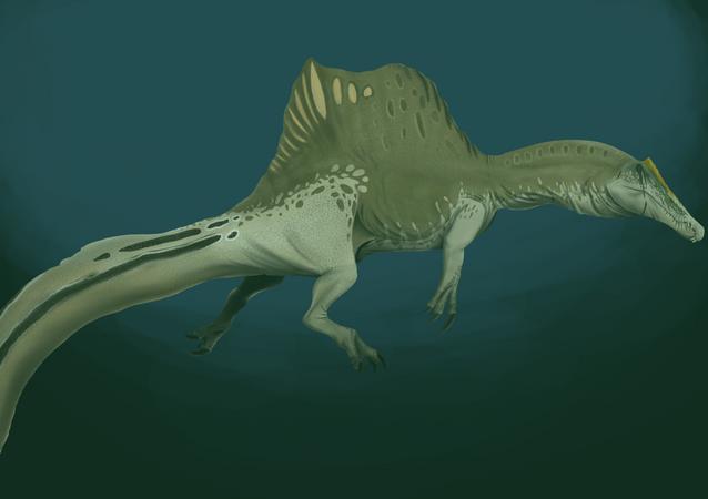 Ilustração do réptil Spinosaurus aegyptiacus