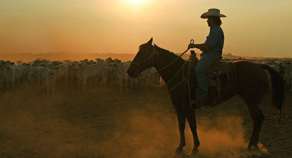 Peão e gado durante pôr do sol em fazenda próxima da cidade de Sinop, Mato Grosso, 10 de agosto de 2020