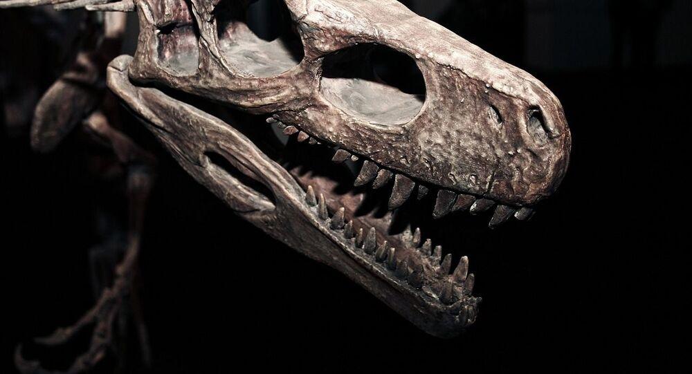 Esqueleto de dinossauro