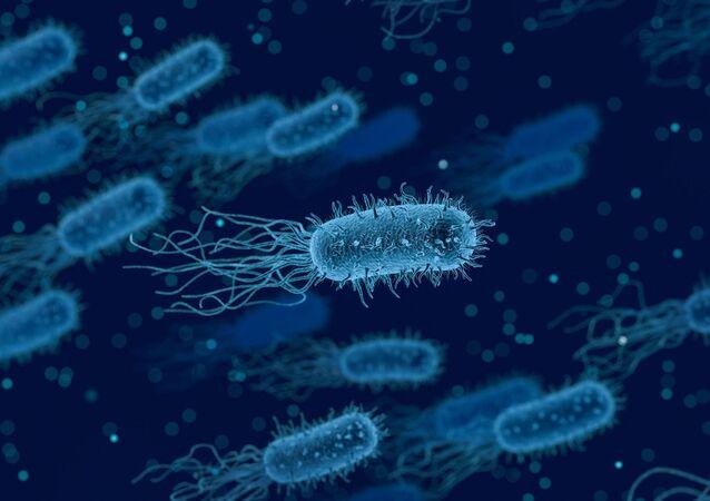 Bactérias (imagem referencial)
