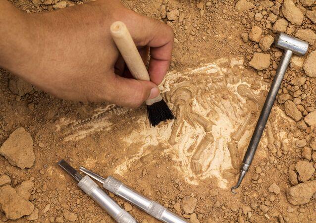 Esqueleto e instrumentos arqueológicos