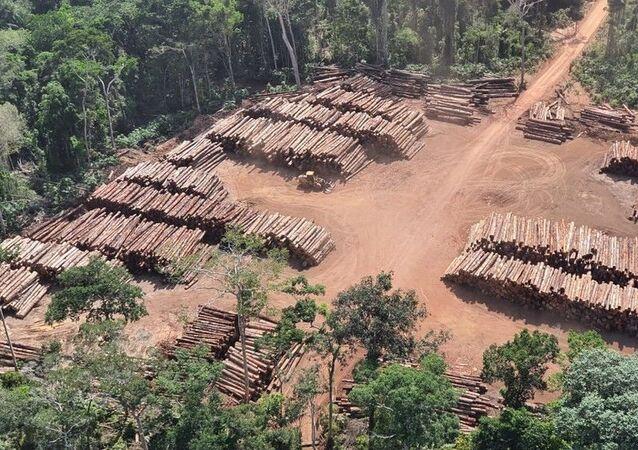 Em 2020,, outra grande operação da PF foi mirando apreensão de madeira ilegal foi realizada e ficou conhecida como a maior apreensão de madeira da história do Brasil, divisa do Pará com Amazonas, 21 de dezembro de 2020