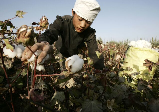 Trabalhador colhe algodão cru em uma área de cultivo de algodão no noroeste da China, na região autônoma de Xinjiang