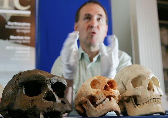 Chris Stringer, pesquisador do Museu de História Natural e do Instituto Francis Crick, no Reino Unido, apresenta crânios ancestrais