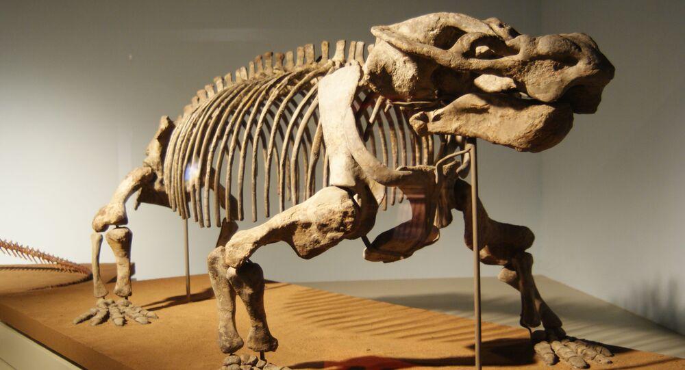 Dicinodonte (imagem referencial)