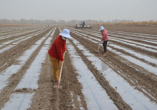 Máquina semeadora lança sementes perto de trabalhadores no campo de algodão do Corpo de Produção e Construção de Xinjiang, região autônoma Uigur de Xinjiang, China, 26 de março de 2021
