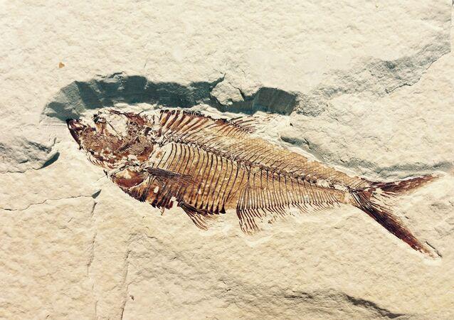 Fóssil de peixe