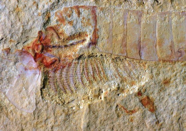 Antigo artrópode (imagem referencial)