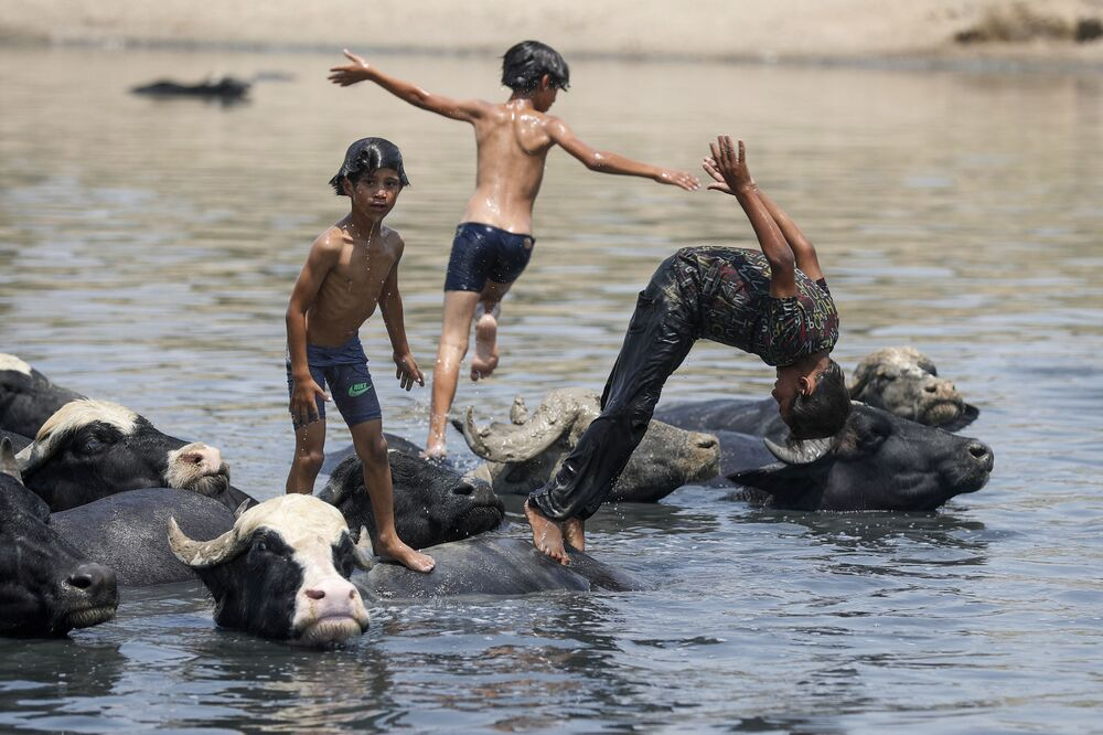 Garotos iraquianos brincam no rio Diyala, perto de uma manada de búfalos, a nordeste de Bagdá, 2 de agosto de 2021