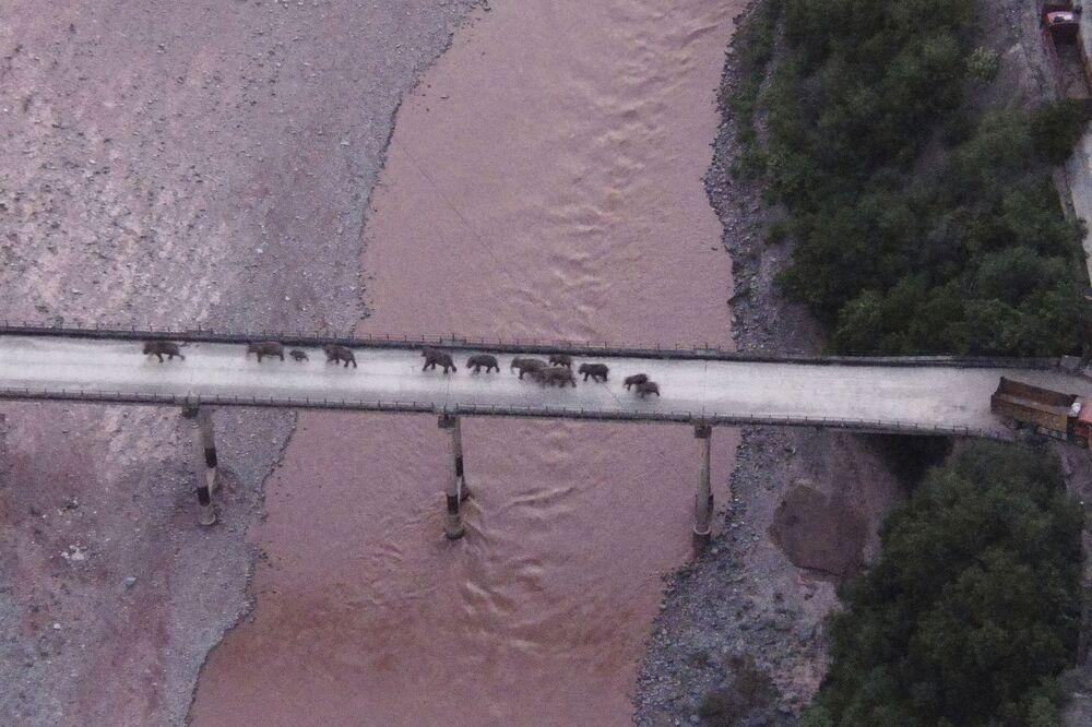 Fotografia aérea mostra uma manada de elefantes atravessando um rio utilizando uma autoestrada perto da cidade de Yuxi, no sudoeste da província de Yunnan, na China, 8 de agosto de 2021