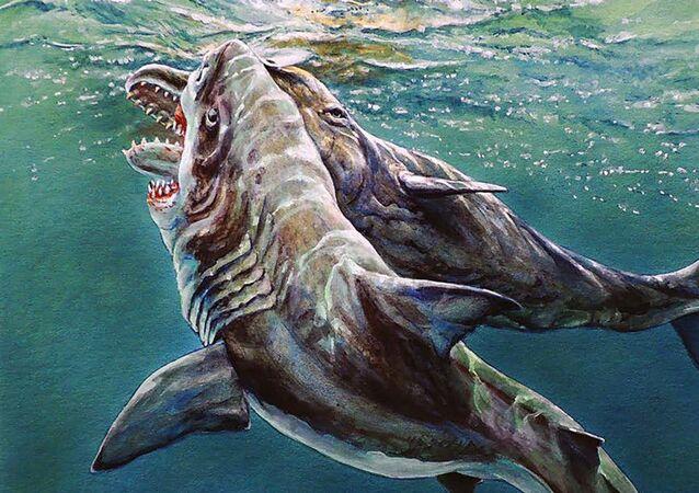 Representação artística do ataque de um tubarão gigante contra um cachalote