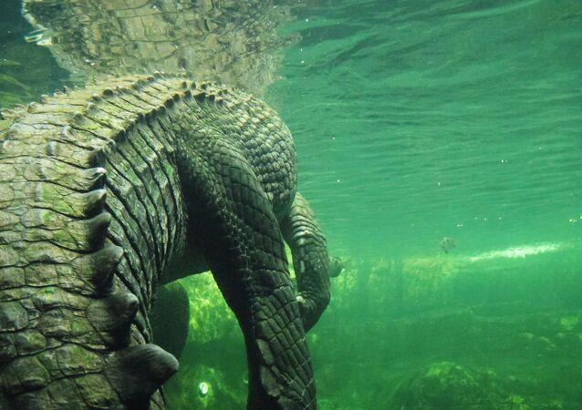 Monstro do mar (imagem referencial)