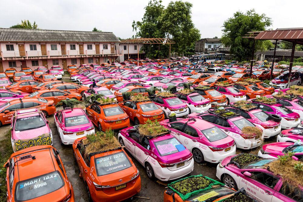 Pequenos jardins de vegetais colocados nos tetos exteriores de taxis em Bangkok, na Tailânida, em 15 de setembro de 2021