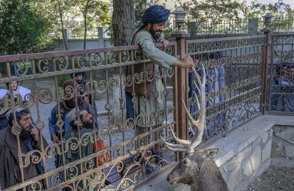 Militante talibã toca em haste de veado no zoológico de Cabul, no Afeganistão, em 17 de setembro de 2021