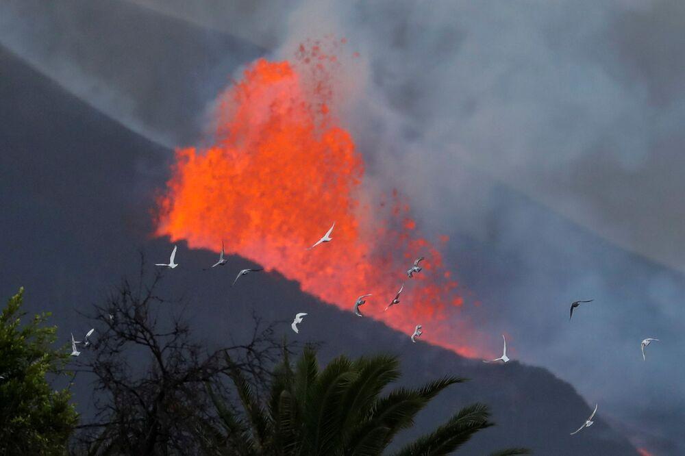 Pombas voam em frente da lava do vulcão Cumbre Vieja, 28 de setembro de 2021