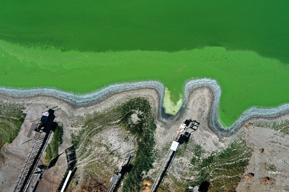 Floração de cianobactérias torna a água verde em Clearlake, Califórnia, EUA, 26 de setembro de 2021