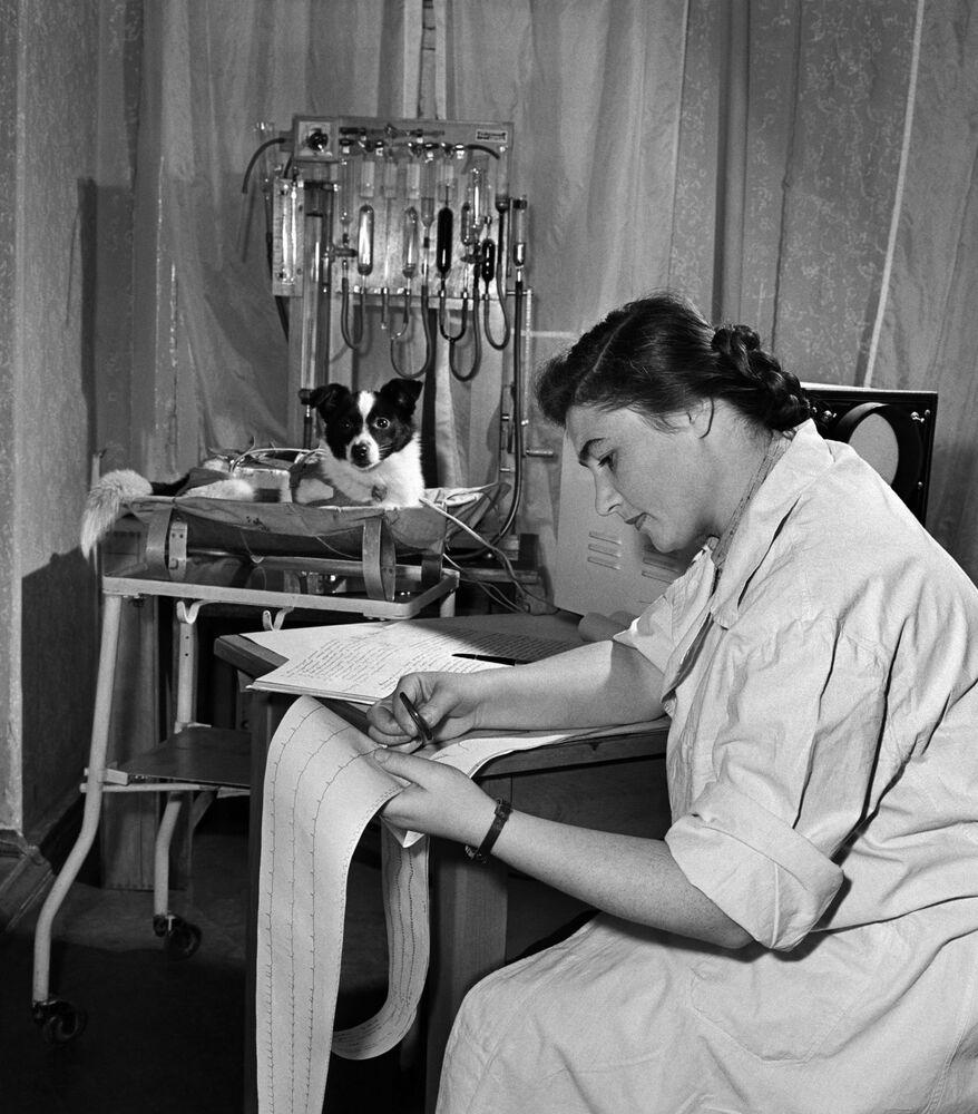 Fisióloga Ada Kotovskaya durante preparação do cachorro Laika para o voo ao espaço exterior no segundo satélite artificial da Terra. Laika se tornou o primeiro animal lançado à órbita da Terra, em 3 de novembro de 1957