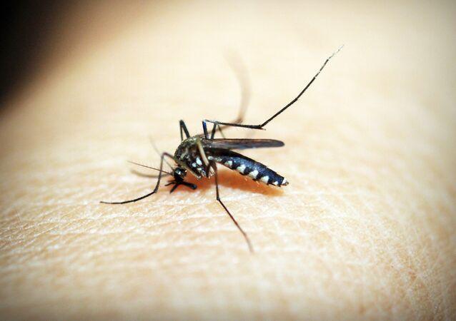 Mosquito (imagem referencial)