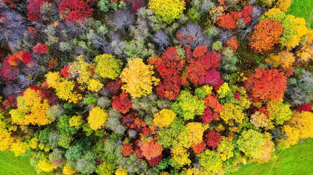 Cores do outono (no Hemisfério Norte) no município de Veps Volost, distrito de Prionezhsky na república da Carélia, na Rússia