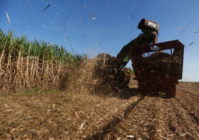 Colheita de cana-de-açúcar mecanizada em Sertãozinho (SP)