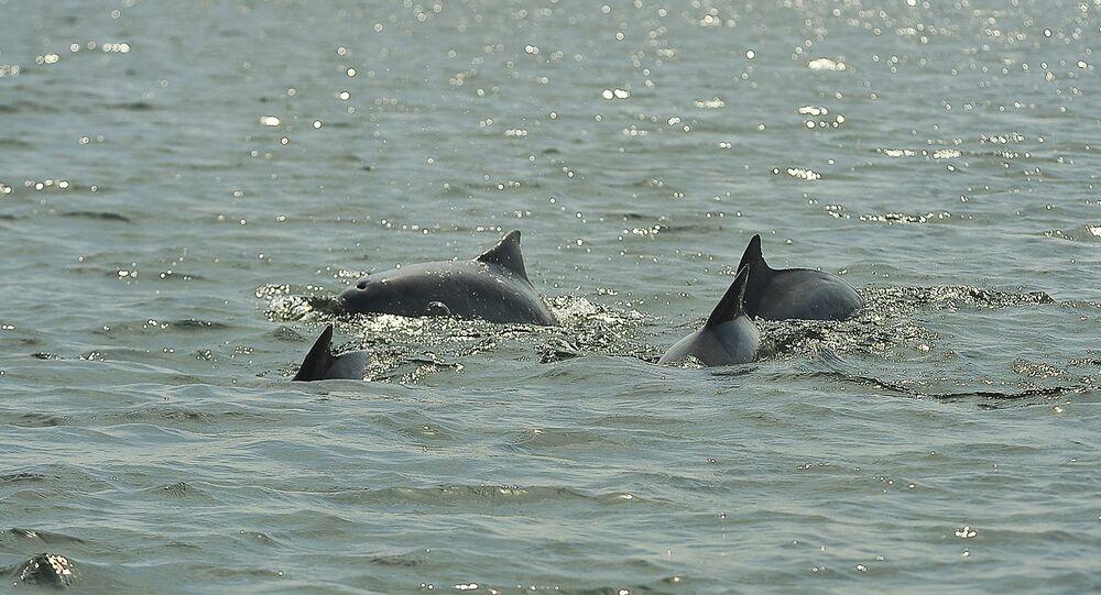 Em 20 dias, quase 100 caracaças de golfinhos já foram retiradas da Baía de Sepetiba