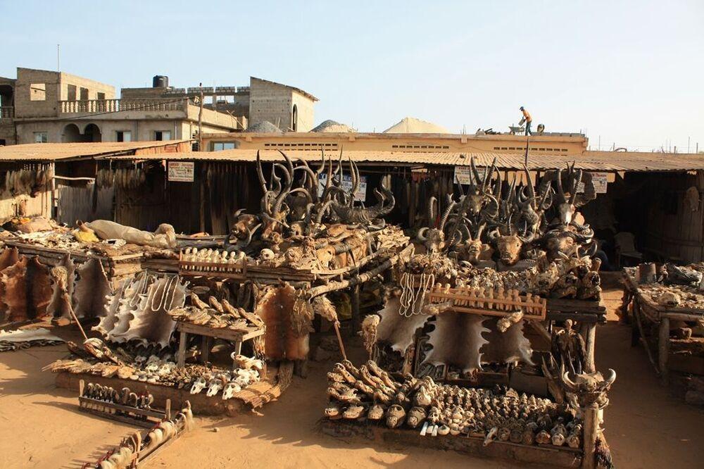 No mercado de Akodessewa, há cabeças, rabos, crânios e pele de vários animais à venda. Em particular, há partes do corpo de crocodilos, gatos, macacos, corujas, serpentes, entre outros