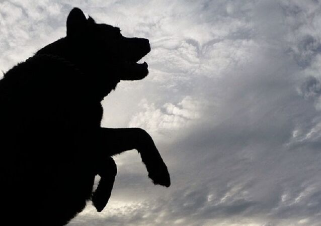 Silhueta de cachorro