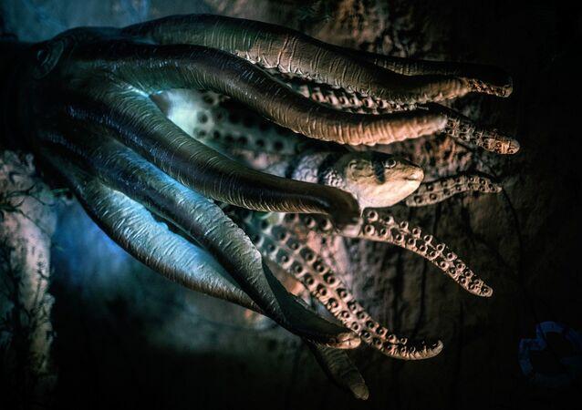 Polvo e peixe em águas profundas (imagem referencial)