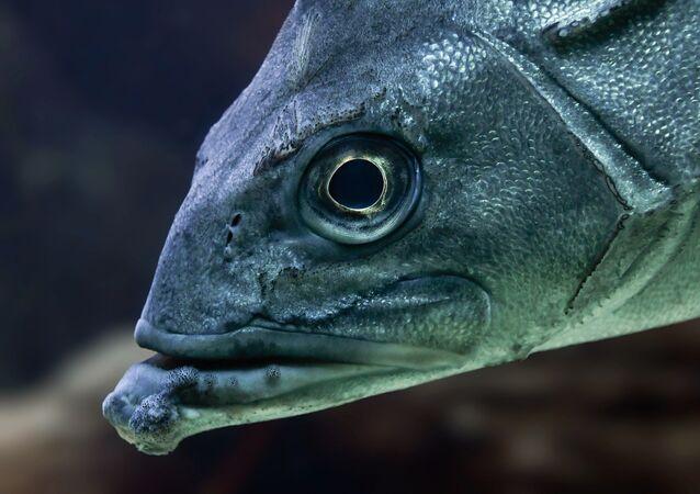 Peixe (imagem ilustrativa)