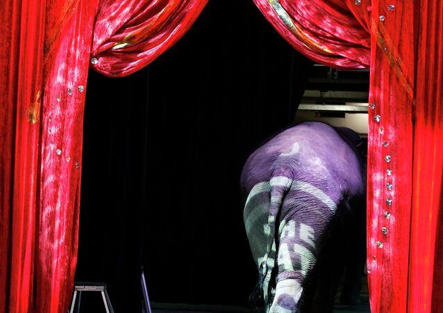 Elefante saindo da cena em um circo em Washington (foto de arquivo)