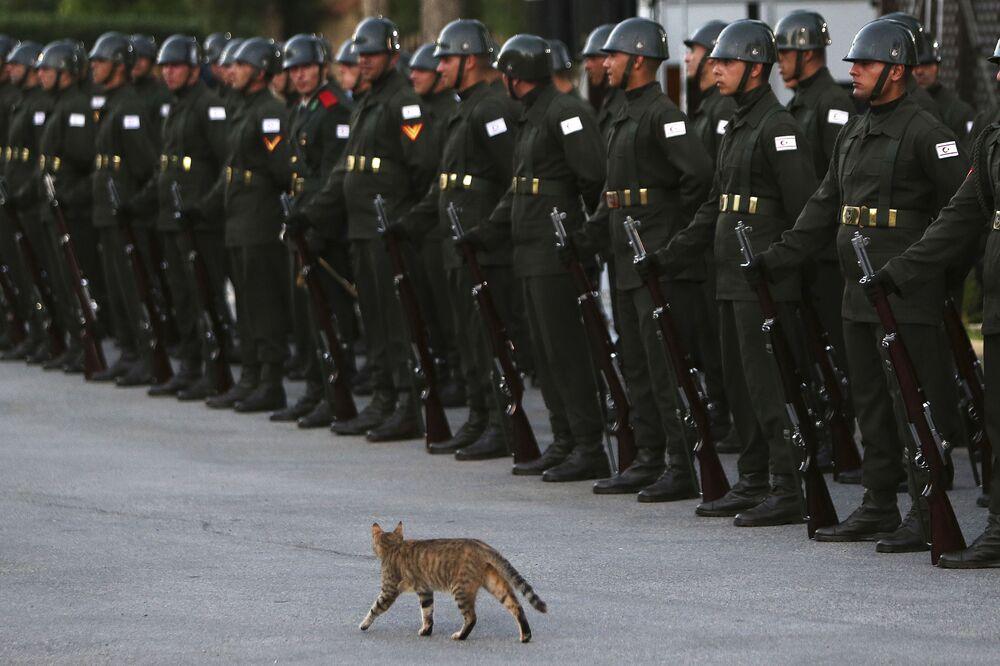 Gata selvagem perto da guarda de honra que aguarda o presidente turco, Recep Tayyip Erdogan, em Nicósia