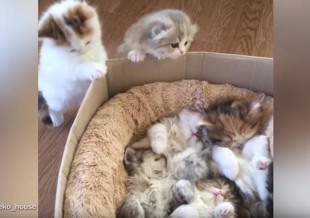 Gatinhos vendo outros gatinhos dormindo