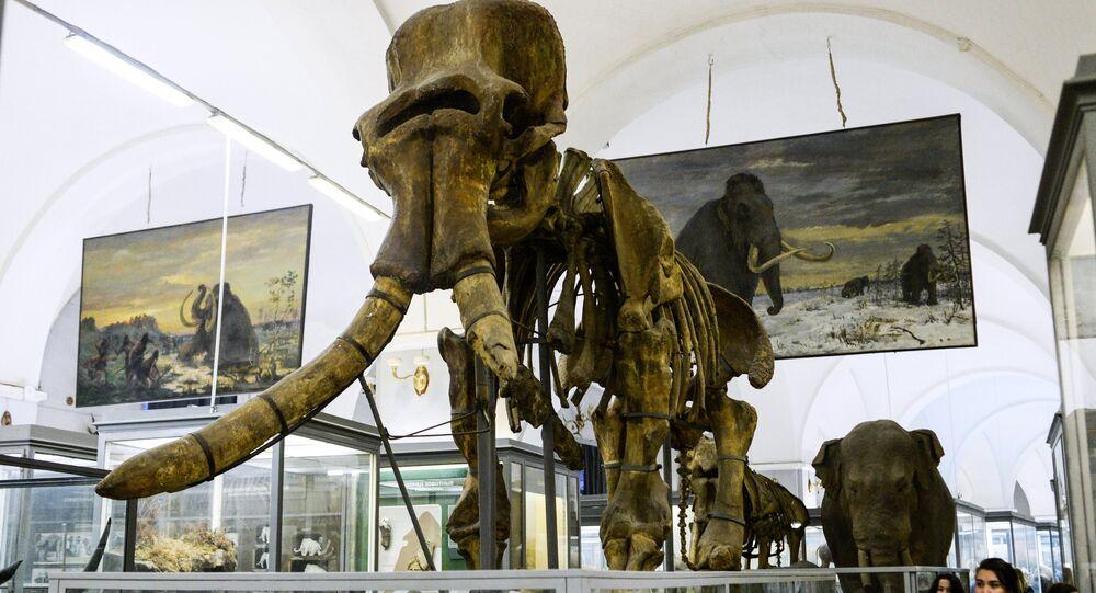Esqueleto de mamute em museu da cidade russa de São Petersburgo (imagem referencial)