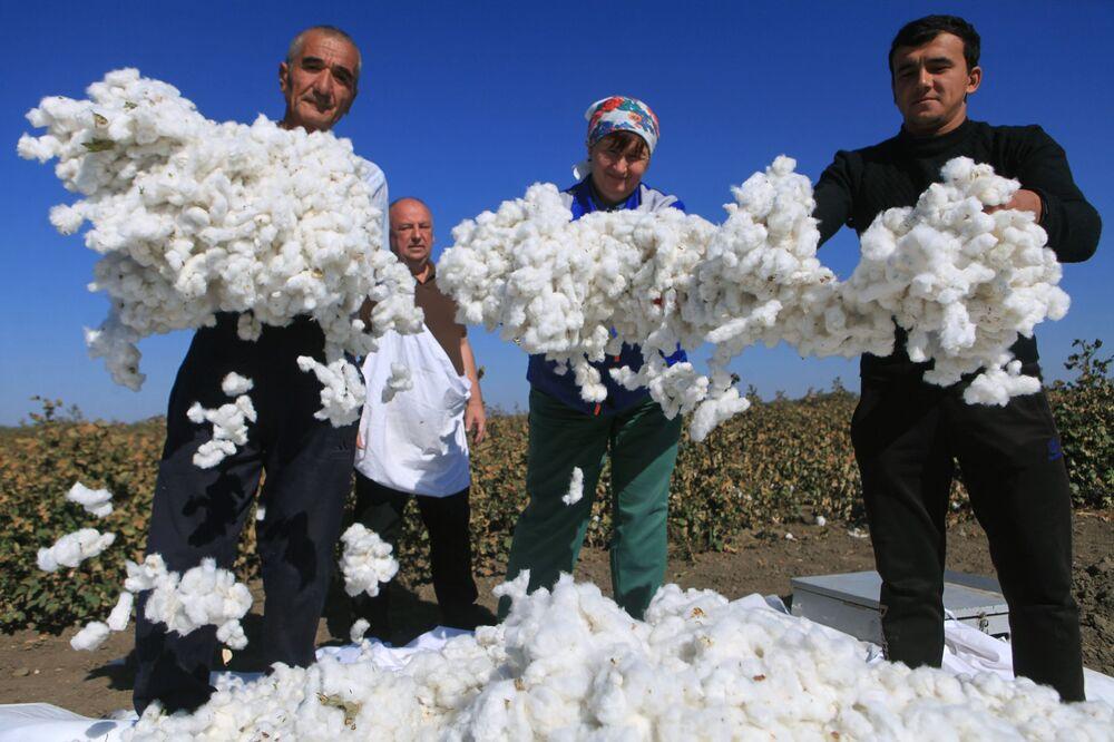 Safra de algodão, a primeira nos últimos 50 anos, é feita na região russa de Stavropol
