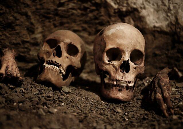 Crânios humanos