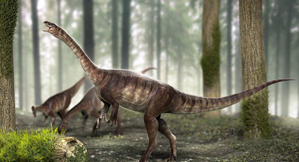 Dinossauro de pescoço longo mais antigo do mundo é achado no Brasil
