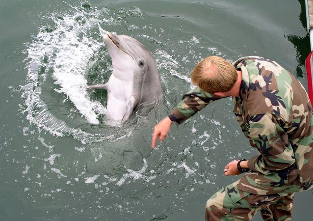 Fuzileiro da Marinha dos EUA treinando golfinho (imagem de arquivo)