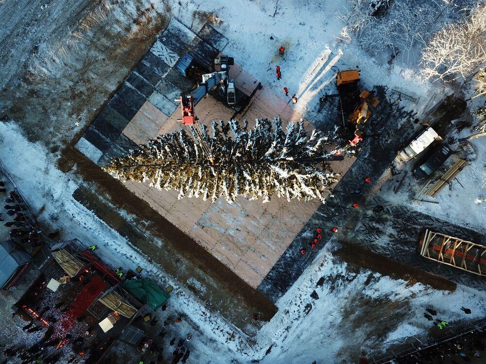 Corte do pinheiro de 100 anos de idade, com 27 metros de altura, que será colocado no centro de Moscou, Rússia, 18 de dezembro de 2018