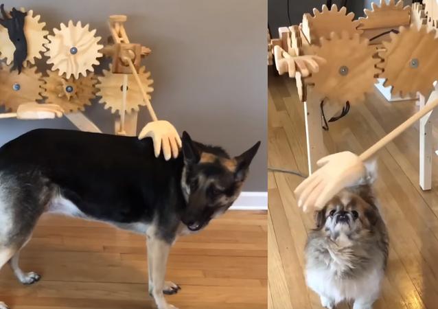 Criativa máquina de fazer carinhos não impressiona cachorros