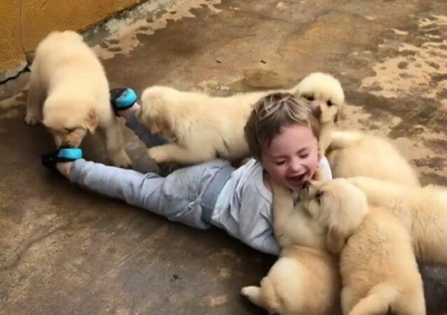 Criança é 'atacada' por filhotes de golden retriever