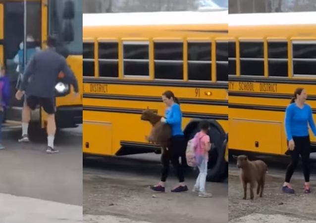 Bode sobe em ônibus escolar mas acaba sendo retirado