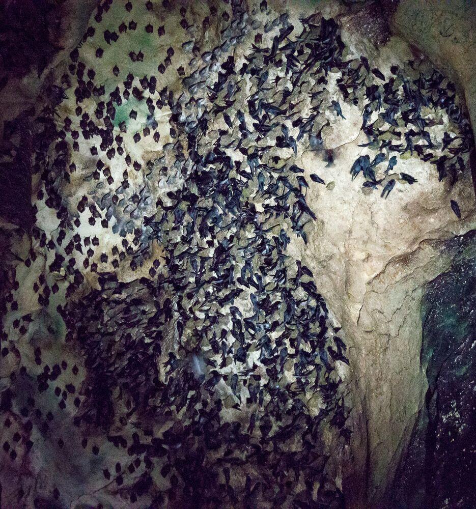 Aves e morcegos nas cavernas Gomantong