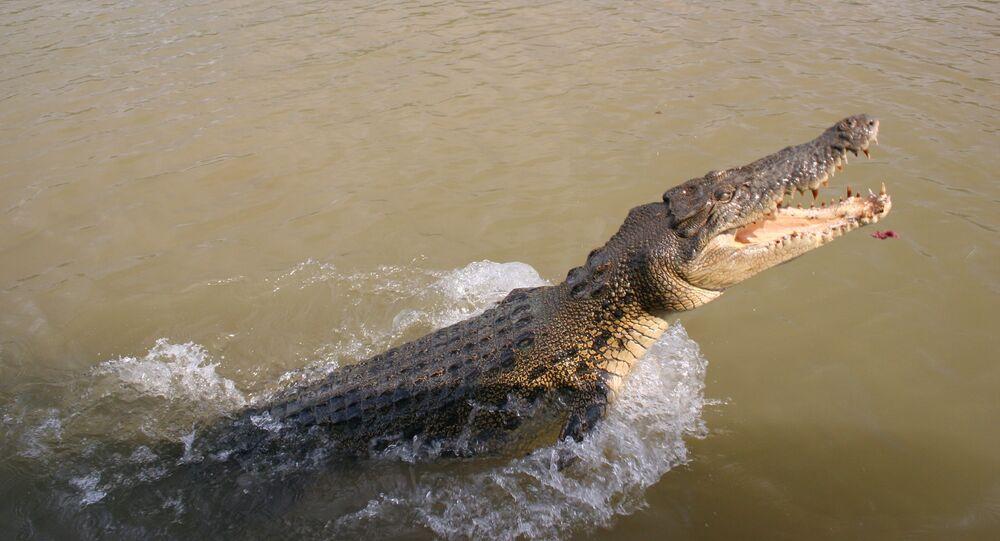 Crocodilo em rio