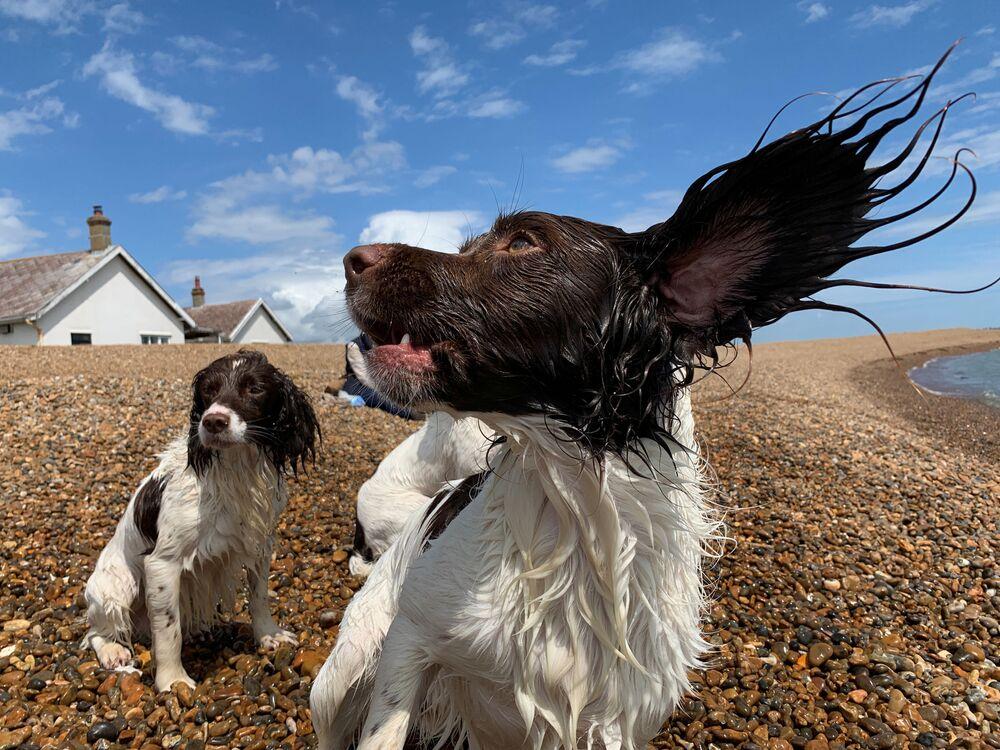 Cães brincam em praia britânica